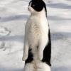 极品企鹅舞曲