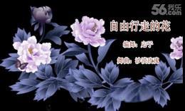 斯羽廣場舞《自由行走的花》編舞応子