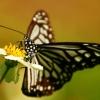 蝴蝶翩翩燕子飞