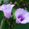 一朵花两朵花三朵花