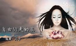 応歌燕舞南京隊《自由行走的花》